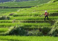 farmer-in-asia.jpg